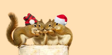 Image mignonne de quatre �cureuils adorables b�b�s sur une b�che de bouleau partager quelques graines de tournesol, les deux gar�ons portant des chapeaux de No�l, avec copie espace.