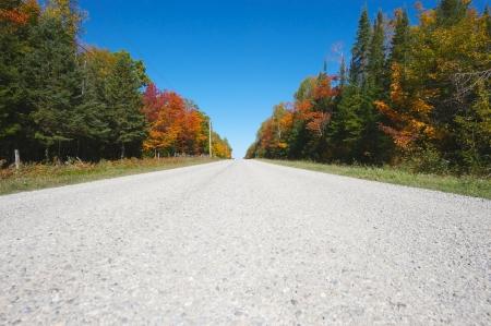 perspectiva lineal: Niza amplio ángulo de visión lineal de un camino tranquilo enmarcado por los árboles en otoño de colores brillantes.
