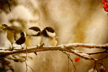 chickadee: Vintage Christmas card with adorable chickadees in the snow with copy space