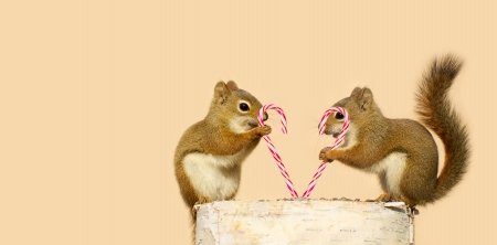 funny love: Young squirrels holding candy canes, and looking happy while perched on a birch log with copy space