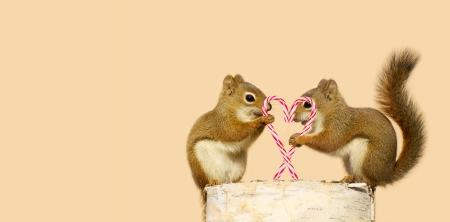 A pair of young squirrels in love holding candy canes in the shape of a heart, and looking happy while perched on a birch log with copy space   Stock Photo - 15851954