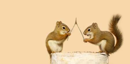Funny young squirrels on a log with a wishbone, making wishes