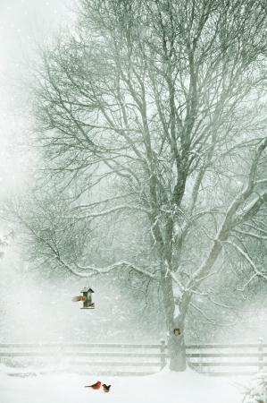Conception de la carte de No�l avec un couple de cardinaux sous le chargeur dans la neige, un petit �cureuil furtivement hors de son trou dans l'arbre, et les petits oiseaux sur le chargeur