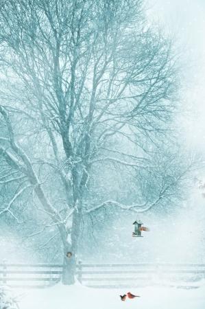 눈 피더에서 추기경의 한 쌍의 크리스마스 카드 디자인, 자신의 나무 구멍, 그리고 피더에 작은 새의 엿보기 작은 다람쥐