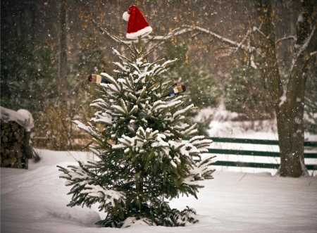 A Spruce tree in the snow decorated with a Santa hat and mitts, and a little chickadee perched on one of its branches   Stock Photo - 17065229
