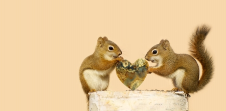 Pair of squirrels with the male giving the female a special heart shaped stone for Valentine s Day