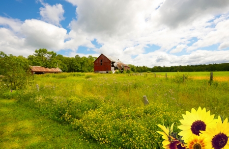 Beautiful summer country landscape. photo