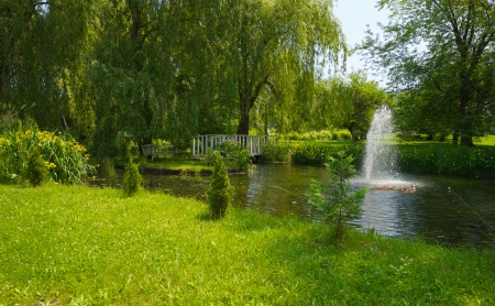 weeping willow: Beautiful summer pond with a fountain and a family of ducks swimming by.