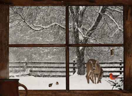Scenic view of a mother, and baby deer, a bright red Cardinal, and two cute chickadees in a snowstorm, seen through a grunge farm house window with a cup of steaming coffee on the windowsill