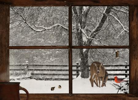 Vue panoramique d'une m�re, et cerfs communs de b�b�, un cardinal rouge vif, et deux m�sanges mignon dans une temp�te de neige, vue � travers une fen�tre de la maison grunge de ferme avec une tasse de caf� fumant � la fen�tre