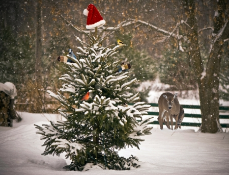 A Spruce tree in the snow decorated with a Santa hat and mitts, with colorful winter birds perched on its branches, with a mother, and baby deer looking on in the background