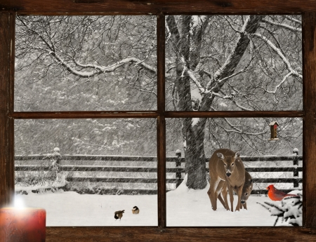 snow cardinal: Christmas card design with a mother, and baby deer, a bright red Cardinal, and two cute chickadees in a snowstorm, as seen through a grunge farm house window   Stock Photo