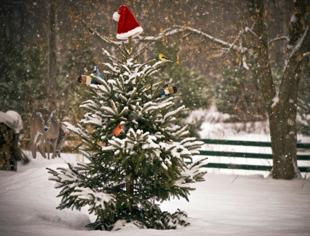 green jay: Un árbol de abeto en la nieve adornada con un sombrero de Papá Noel y manoplas, con pájaros de colores de invierno encaramado en sus ramas, con una madre y ciervos del bebé que miran encendido en el fondo