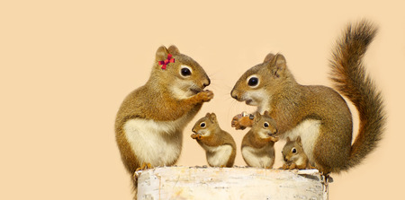 A mother, and father squirrel and their three babies eating sunflower seeds on a birch log in the spring with copy space