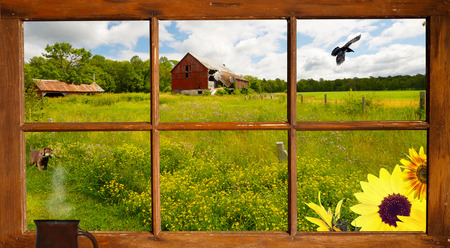 Lovely country landscape seen through an old farmhouse window, with a cute puppy looking at a raven flying by   photo