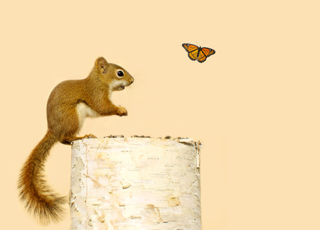 B�b� suirrel enjoying graines sur un journal est heureux de voir un papillon en passant par.