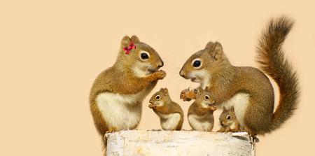 Een moeder en vader eekhoorn en hun drie kinderen het eten van zonnebloempitten op een berk log in het voorjaar met kopie ruimte