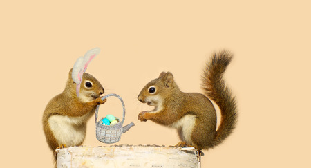 log basket: Two young squirrels in love, with the girl presenting an Easter basket to the boy, while wearing bunny ears   Stock Photo