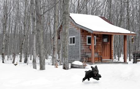L'image humoristique d'un caniche jouet mignon courir dans la neige, avec un �cureuil courir loin dans le fond, et une m�sange mignon sur le toit de la cabane dans les bois.