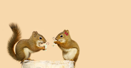 Humorous image of a pair of squirrels drinking egg nog with candy canes at Christmas while perched on a birch log, with copy space.
