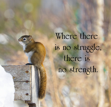 Inspirational quote on adversity with a sad little squirrel shivering with cold in the winter. Stock Photo