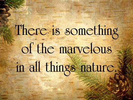 Inspirational quote on nature, on a grunge textured birch bark and pine .