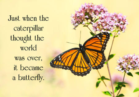Inspirational quote on life with a pretty monarch butterfly perched at a flower.