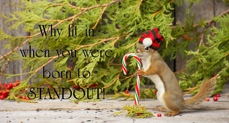 Inspirational quote on individuality by with a little squirrel proudly wearing his Christmas hat,  holding a candy cane in the winter. photo