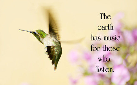Inspirational quote on nature with a beautiful hummingbird in motion in the garden. photo