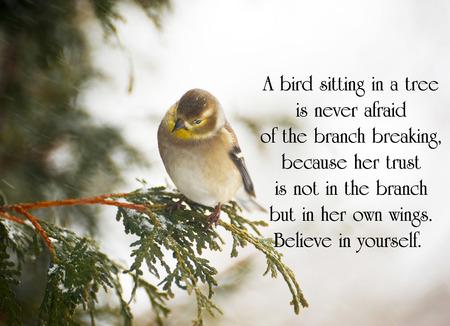 Citation inspir�e de la vie avec une jolie chardonneret perch� sur une branche en hiver.