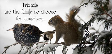 three animals: Citazione Inspirational su amicizia con tre animali seduti insieme su un ramo nel corso di una grande tempesta di neve.