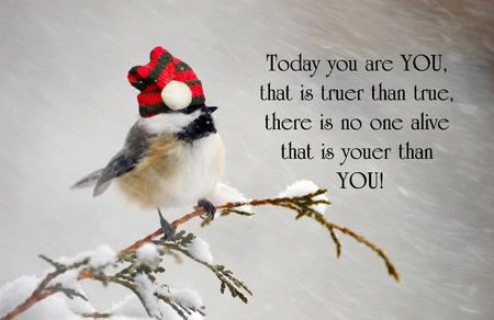 Inspirational quote about individuality, with a cute chickadee wearing his Christmas hat during a snowstorm.