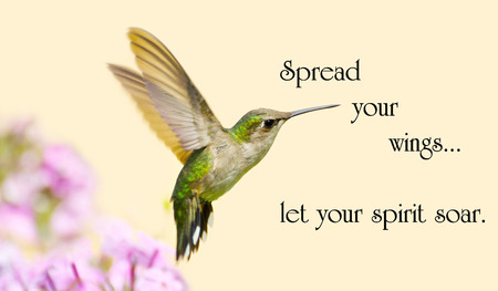 Inspirational quote on life with a beautiful ruby throated hummingbird in motion in the garden. photo