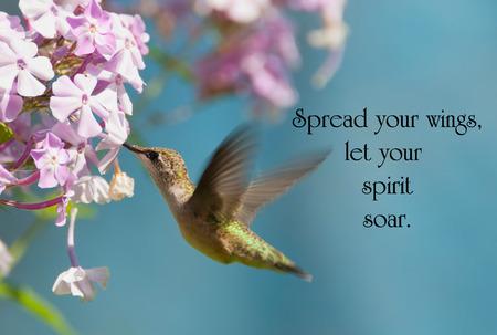 Cita inspirada en la vida con un hermoso rubí throated colibrí en movimiento en el jardín.