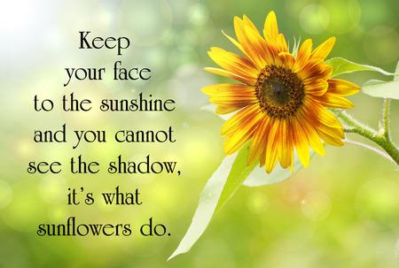 아름다운 햇빛에 해바라기 및 bokeh와 삶에 대한 영감 따옴표.