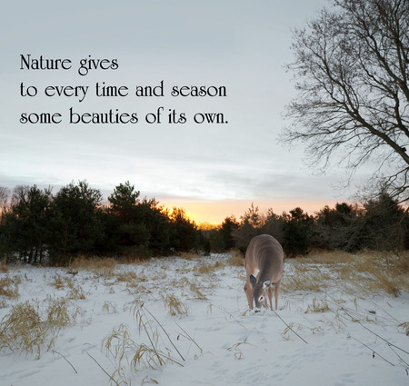 Inspirational quote on nature, with a lone doe looking for food in the meadow at sunrise in the winter. 版權商用圖片