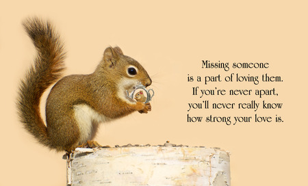Inspirational quote on love,  with a young male squirrel holding on lovingly to a tiny antique picture frame with a picture of his sweetheart in it. photo