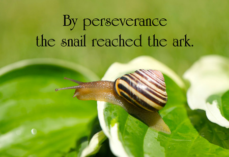 Inspirational quote on perseverance, with a little garden snail making its way through life.