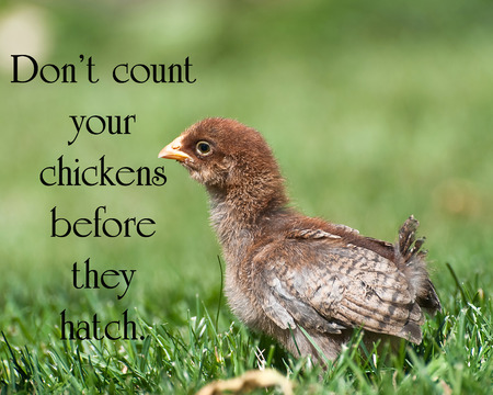 Quote on life with a little chick in the grass. photo