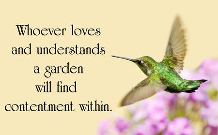 정원에서 동작하는 아름다운 루비 throated Hummingbird와 자연에 대한 견적