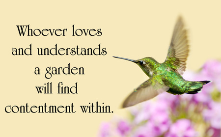 Quote about nature with a beautiful ruby throated hummingbird in motion in the garden