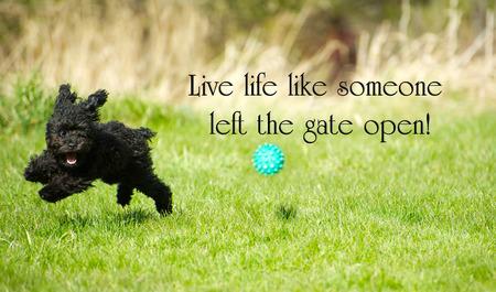 최대한 인생을 즐기는 사랑스러운 장난감 푸들과 영감 단어, 행복 여름에 주위 리핑.