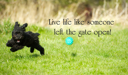 Inspirational words with an adorable toy poodle enjoying life to the fullest, happily ripping around in the summer.