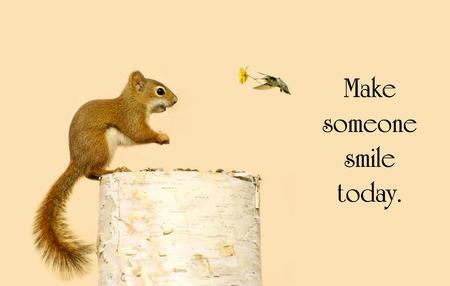 Inspirierend Mitteilung über Güte mit einer kleinen Eichhörnchen glücklich, empfängt eine kleine Blume aus seinem Kolibri Freund.
