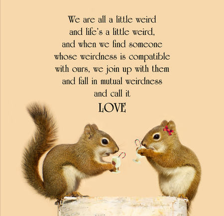 Inspirational quote on love with a cute pair of squirrels in love, enjoying some eggnog at Christmas time. Stock Photo