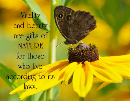 wood nymph: Inspirational quote on nature with a close up image of a beautiful wood nymph butterfly perched on a brown eyed susan flower.