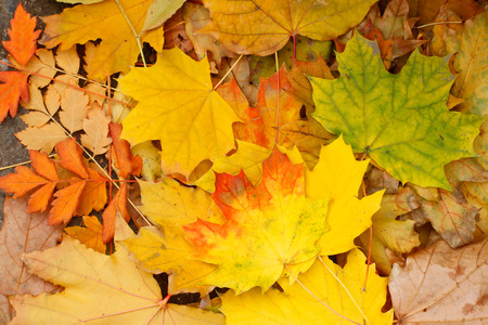 coloured background: Autumn Leaves use as background