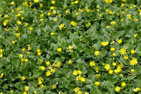 champ de fleurs: Field flowers full frame background
