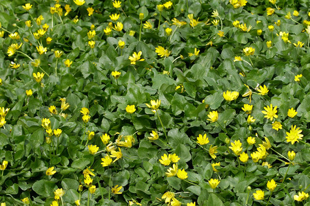 campo de flores: Flores del campo de fondo de fotograma completo Foto de archivo