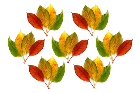 Multicolored autumn leaves use for background Stock Photo